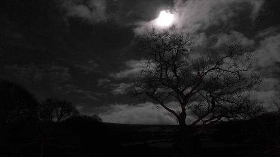 Bearslake Inn: Dartmoor magic!