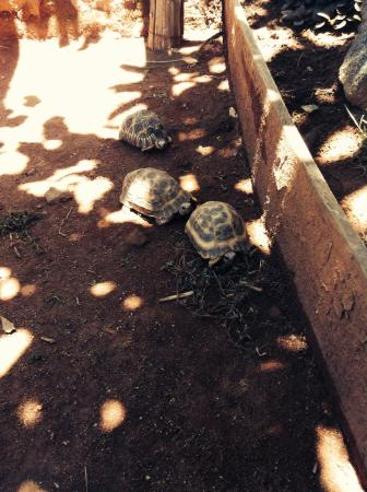 Hotel Manoir Rouge: Petit parc a tortues