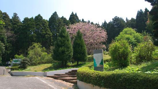 Hodatsushimizu-cho, Япония: 伝説の森公園(モーゼパーク)