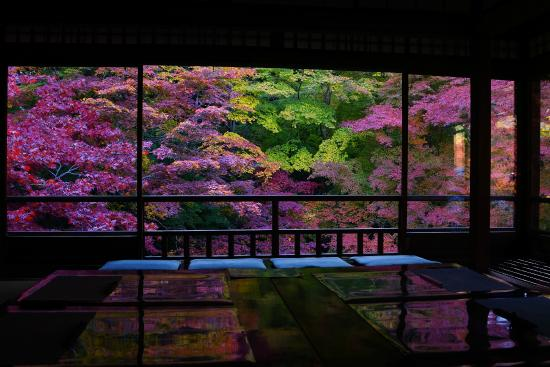 Rurikoin: 2階から眺めるお庭