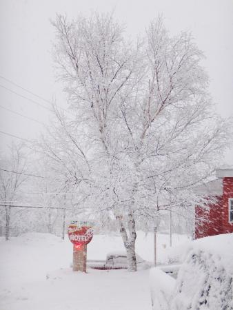 Terrace Motel: Snow covered tree next to the office.