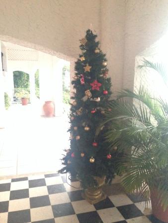 Golden Clouds Villa Estate: The Christmas tree!