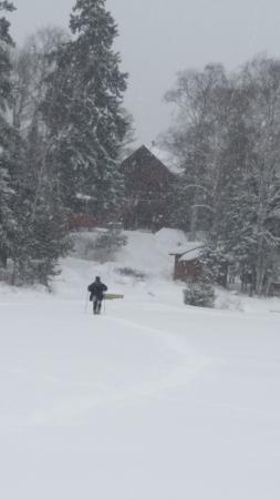 Big Bear Lodge and Cabins : January beauty