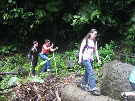 Gecko Trail Adventures Animal Rescue Centre, Chocolate Lady and Waterfall Tour: Hiking to the waterfall
