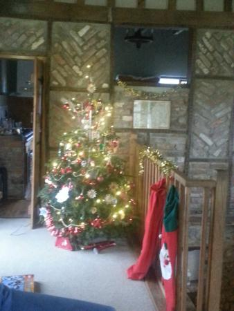Middlewick Holiday Cottages: Our tree in perfect setting