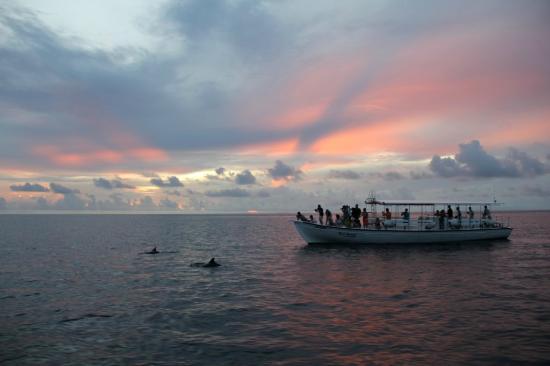 Kuramathi: Sunset Cruise and Dolphins