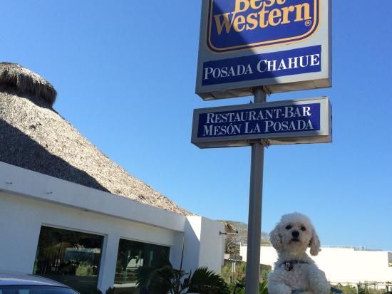 Best Western Posada Chahue: Lo mejor es que aceptan a tu mascota