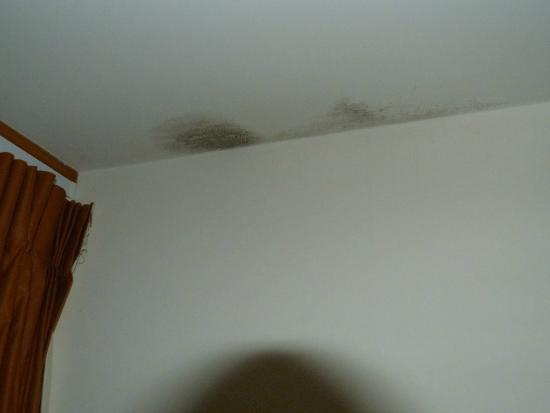 Swiss-Belresort Coronet Peak: Mould in room