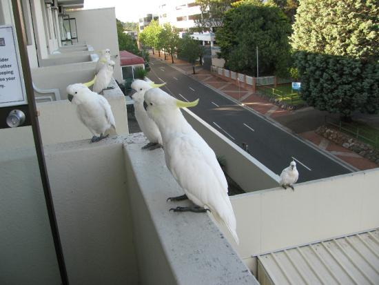 Metro Hotel Miranda: Cockatoos greeted us each morning