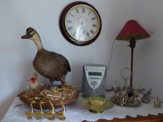 The Duck House: Quirky collection of ducks