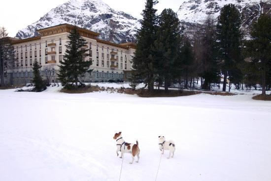 Maloja Palace Hotel : view from the nordisk ski area