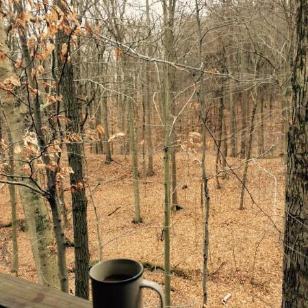 Bear Run Inn Cabins & Cottages: View from the back of the porch looking over the ravine