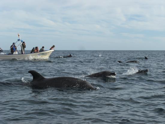 Loreto Bay National Marine Park: Bienvenida de los locales a Isla Coronado