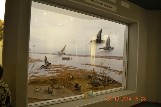 Nature Museum of The Kostroma Region : Весна