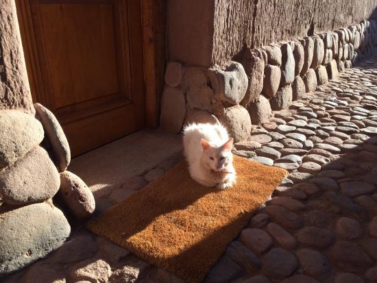 Altiplanico Atacama: Contato com natureza