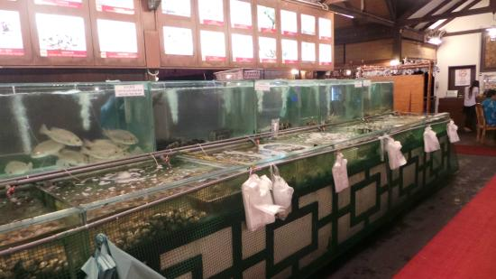 Kampung Nelayan : Aquariums used for keeping the fishes, lobsters, prawns, oysters, etc.
