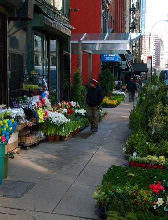 Floral shops near hotel picture of hilton garden inn new Hilton garden inn new york manhattan chelsea