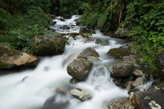 Sendero Los Quetzales (The Quetzales Trail) : Caldera river