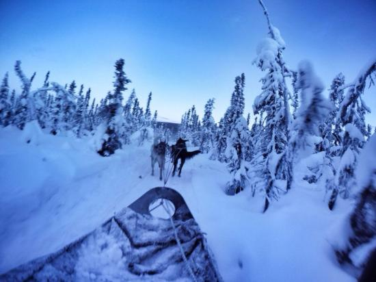 1st Alaska Tours: Dog sledge riding