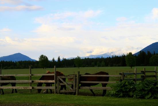 Cedar Mountain Farm Bed and Breakfast: Pasture