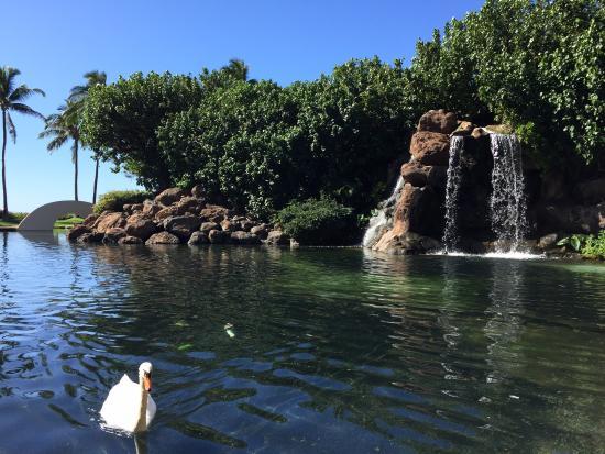 Hyatt Regency Maui Resort and Spa: The view for the breakfast
