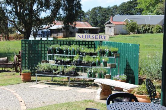 Warratina Lavender Farm: nursery