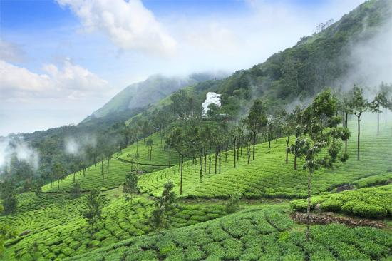 Photo of Misty Mountain Resort Munnar