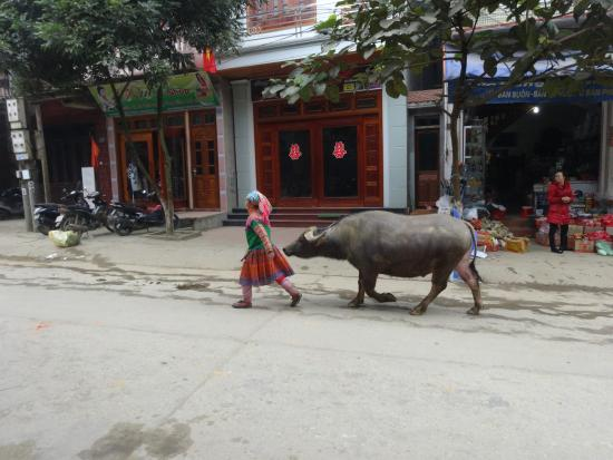 Indochina Pioneer - Day Tours: Off to market