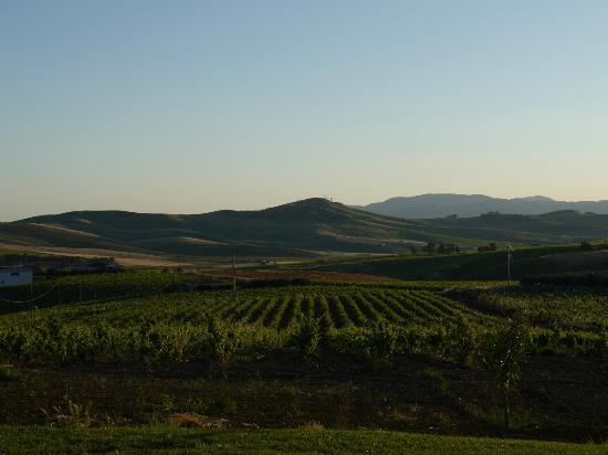 Azienda Agricola Spadafora : Weinberge