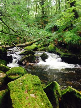 Golitha Falls: Lovely tranquil walk along the fowey, very picturesque, use a long lead if dog walking as the wa
