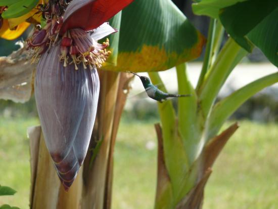 Gran Caribe Club Villa Cojimar: colibri in azione
