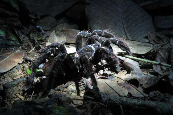 Heath River Wildlife Center: The chicken spider