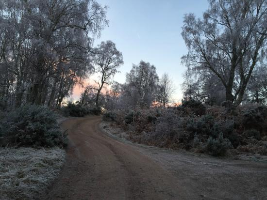 Torcroft Lodges : Looking up the lane first thing in the morning