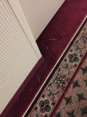 Extended Stay America - Orlando - Altamonte Springs: You can tell they never vacuum the carpets... ever.