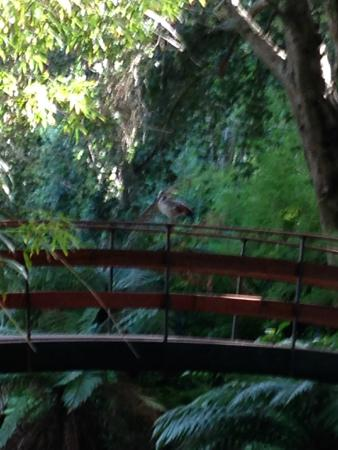 Arderne Gardens: Bridge over the pond