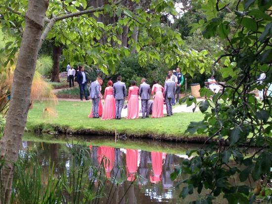 Arderne Gardens Cape Town Wedding