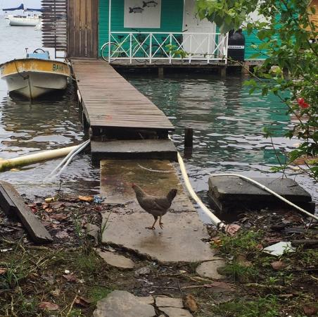 Bocas Villas: Boat Docking