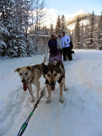 Kingmik Dog Sled Tours: All of my family together