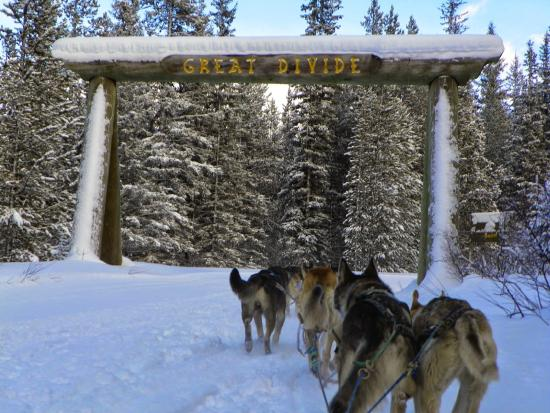 Kingmik Dog Sled Tours: Great Divide sled tours