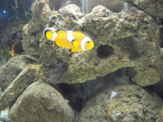 AQUaRIO - Picture of Ubatuba Aquarium, Ubatuba - TripAdvisor