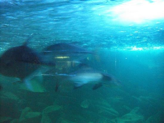 Aquario de Ubatuba : Aquario de Ubatuba - Picture of Ubatuba Aquarium, Ubatuba ...