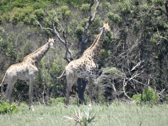 Bushbaby Lodge & Camping: za płotem