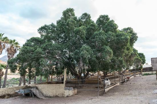 Horse Riding Tenerife: Trees over ranch