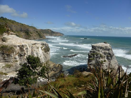 Milestone Tours: Gannet Colony in Muriwai