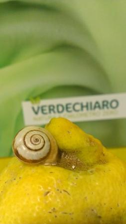 Verdechiaro