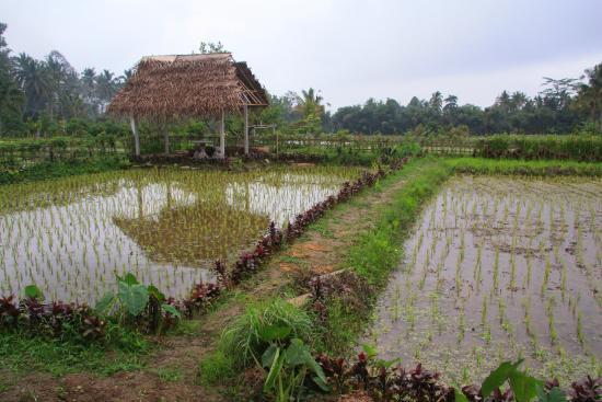 Mesas - Picture of Pangkon Bali (Rumah Makan & Agrowisata), Gianyar ...