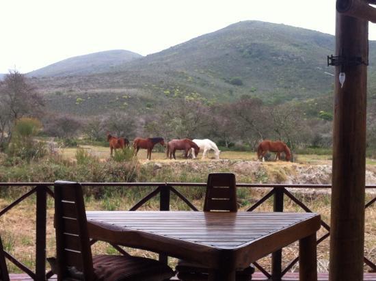 Nyaru Game Lodge: Pferde vor der Lodge