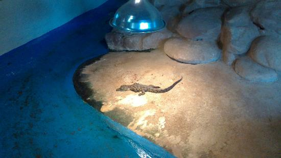 Riverbend Crocodile Farm: Baby just hatched.