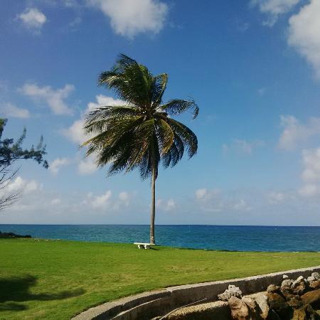 Sea Palms照片