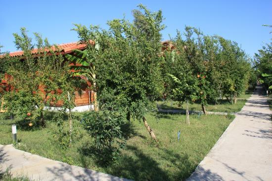 Villa Iz: домики